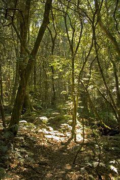 Kologha Forest