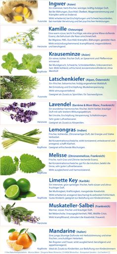 Individual essential oils – A – G – drugstore Meier [Drogerie Meier Römertor] - All About Health Healing Herbs, Medicinal Herbs, Health Tips, Health And Wellness, Health Fitness, Doterra, Belleza Diy, Fusilli, Dash Diet