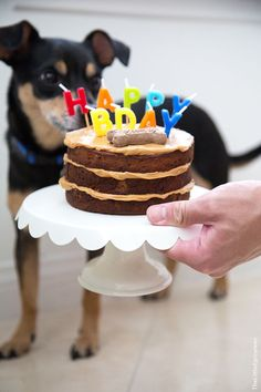 Peanut Butter Apple Pupcake-The Little Epicurean - The Best Dog Safe Cake Recipes for Your Pets Dog Safe Cake Recipe, Dog Cake Recipes, Dog Food Recipes, Pet Treats, Healthy Dog Treats, Tiny Dog Breeds, Dog Birthday, Birthday Ideas, Dog Cakes