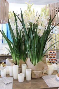 Orchid Cymbidium Plant Lg/Soil - White QLD supplier Katen Interiors