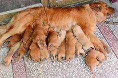 cachorros-madres_1