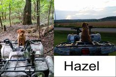 Hazel |  Fox Red Labrador | Puppy | Past Litter Teaka & Duke | Balsam Branch Kennel | Wisconsin | balsam-branch-kennel-fox-red-lab-hazel-td