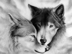 Brother's Love is more stronger I n God. Wolf Photos, Wolf Pictures, Beautiful Wolves, Animals Beautiful, Animals And Pets, Cute Animals, Wolf Tattoo Sleeve, Wolf Artwork, Fantasy Wolf