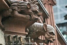 Strasbourg gargoyles cathedral