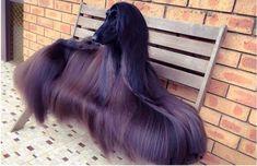 hair goals http://i.imgur.com/3yKnNH7.jpg