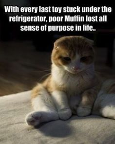 Poor muffin