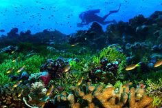 Coral Reef Fish | fish and other colorful reef fish are quickly disappearing from coral ...