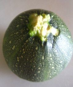 abobora pumpkin
