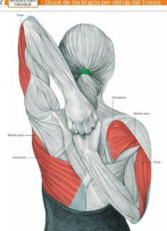 Estiramiento de triceps y dorsal.