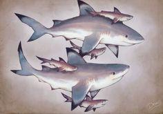 #tiburones #tiburon #shark #sharks