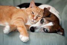 Sleeping dog and cat picture, follow the pic for more ;)