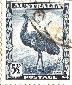 ROYAL BIRD the EMU.  Graceful and precise in motion, stepping lightly on the lawn.