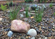Stormwater or rain water flows to a Raingarden. By LandArc Landscaping & Design