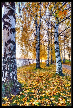 Fall colors, Tampere, Finland