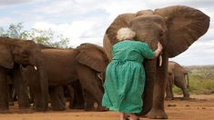 Daphne Sheldrick has dedicated her life to raising orphaned elephants. Once they are old enough, they are taken to protected areas and integrated with other orphan groups. When Daphne visits, the elephants gather around her for a hug. Via - So Good So Bad Beautiful Creatures, Animals Beautiful, Cute Animals, Wild Animals, Baby Animals, Elephas Maximus, Baby Elefant, David Sheldrick Wildlife Trust, Save The Elephants