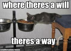 Clever kitty!