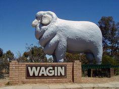 The giant ram - Wagin, Western Australia. Aussie Australia, Australia Funny, Australia Country, Australia Travel, Western Australia, Outdoor Sculpture, Outdoor Art, Giant Animals, Wave Rock
