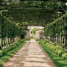 An arbor of pleached Mary Potter crab-apple trees leads to the garden entrance. Upperville, Virginia...