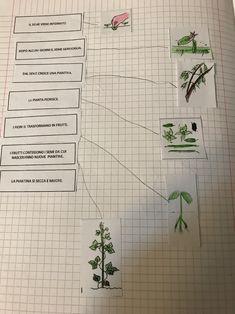 Esseri viventi e non viventi, classe prima – Maestra Mihaela Bullet Journal Inspiration, Botany, 3, Album, Environment, Tecnologia