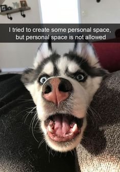 22 Adorable and Funny Animal Pets That Are Doggone Great - Funny Dog Quotes - 22 Adorable and Funny Animal Pets That Are Doggone Great The post 22 Adorable and Funny Animal Pets That Are Doggone Great appeared first on Gag Dad. Funny Dog Photos, Funny Dog Memes, Funny Dog Videos, Funny Dogs, Cute Dogs, Funny Puppies, Funny Husky, Corgi Puppies, Funny Animal Quotes