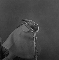 hiroh kikai, 1974 Little Bunny Foo Foo Farm Animals, Cute Animals, Little Bunny Foo Foo, Shadow Play, Historical Images, Animals Images, Vintage Vibes, Wild Horses, Medium Art