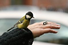 Suddenly a bird landed on my arm - was it my rings from Clan of dk? Funny episode :-) http://clanofdk.com/collections/frontpage/products/ring-2-wonder-1