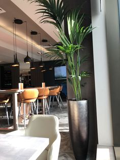 Clayton Hotel, Plants, Plant, Planets