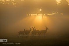 Sunrise  by iesphotography. Please Like http://fb.me/go4photos and Follow @go4fotos Thank You. :-)