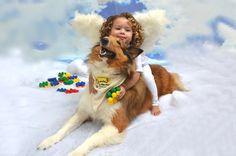 Collie-  raças de cachorros para crianças