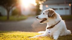 Finding Your Best Bud We know what you're thinking. Isn't it about time you committed to getting a pet? Before going to your local shelter or rescue group to meet the dog of your dreams, get the resources to become a pet adoption pro.