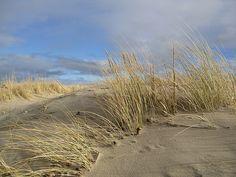 Sand dunes Nairn Scotland by Happy Salmon, via Flickr