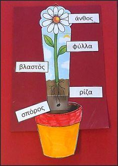mikapanteleon-PawakomastoNhpiagwgeio: Η ανάπτυξη των φυτών στο Νηπιαγωγείο (2)