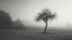 Fog, Nature, Black And White, Landscape, Forest, Mood