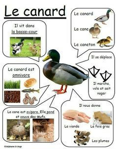 Animal Crafts For Kids, Animal Projects, How To Speak French, Learn French, Pato Animal, Teaching Kids, Kids Learning, French Education, French Classroom