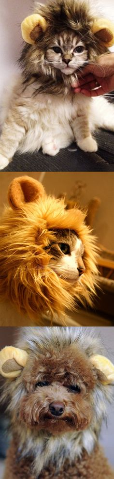 Hear Fluffy Roar with this Cute Lion's Mane for Cats. Also great for puppies and small dogs. Just think of the photo opportunities. #catcostumes #lionmaneforcat