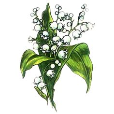 Rostliny - ŠKOLÁKOV Plant Leaves, Plants, Plant, Planets