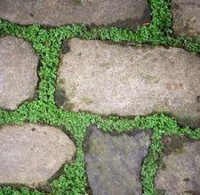 Huellas decorativas Growing Moss, Growing Plants, Patio Plus, Small Patio, Curved Patio, Small Yards, Flagstone Pathway, Walkways, Driveways