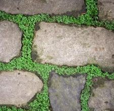 eHow on making your own stepping stones that look like stones...