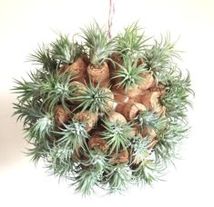 """Using the air plant """"Tillandsia"""" to make a cork sculpture. Cacti And Succulents, Planting Succulents, Planting Flowers, Garden Art, Garden Plants, Garden Design, Air Plants, Indoor Plants, Air Plant Display"""