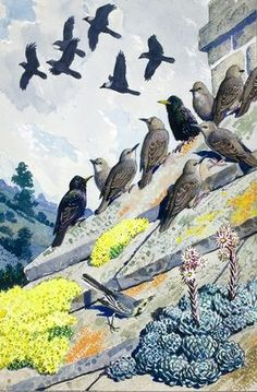 C F Tunnicliffe - Starlings On A Stone Roof