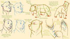 Basic bear anatomy by GOTFA-Comics on DeviantArt Cartoon Sketches, Disney Sketches, Disney Drawings, Bear Character, Character Drawing, Character Design, Animal Drawings, My Drawings, Polar Bear Drawing