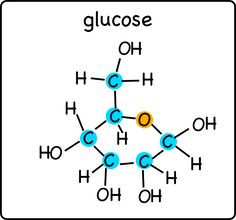 A glucose molecules with the carbon and oxygen atoms in the ring highlighted.