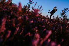 Huwelijksfotografie - Yves Schepers
