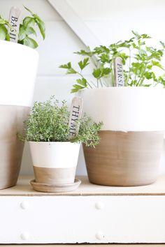 Indoor herb garden pots from crate and barrel