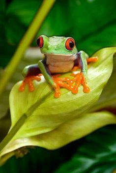 Frog GUDE OUEDO OKER TUS PROBLEMAS.