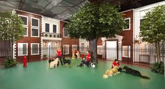 Luxury Spacious Pet Resort (check out picture gallery)
