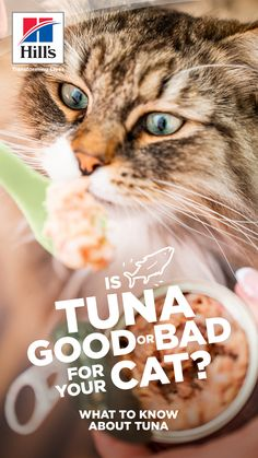 "You've probably noticed your cat saying ""oh, hello"" to fish, but as far as your cat is concerned, is there such a thing as too much tuna? Is it even a good idea for cats to eat tuna made for human consumption? See if there really is such a thing as too much tuna for your cat here. Funny Cats And Dogs, Cats And Kittens, Cute Cats, Baby Animals, Cute Animals, Cat Nutrition, Kitten Care, Cat Health, Beautiful Cats"