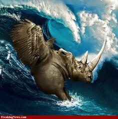 Body-Surfing Sea Rhino