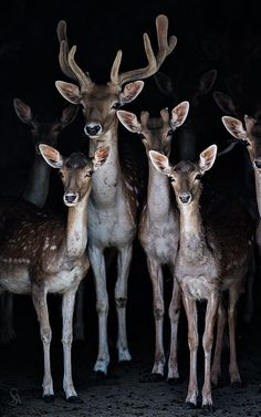 Deer Family lσvє ▓▒░ ♥ #bluedivagal, bluedivadesigns.wordpress.com
