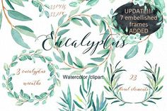 Eucalyptus. Watercolor clipart. by LABFcreations on @creativemarket